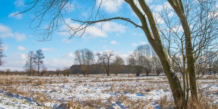 Winterlandschaft Tävsmoor