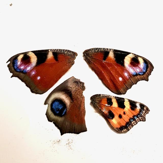 Schmetterlingsflügel aus der Garage